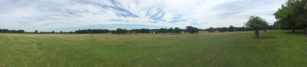 Richmond Park with deer grazing - August 2017